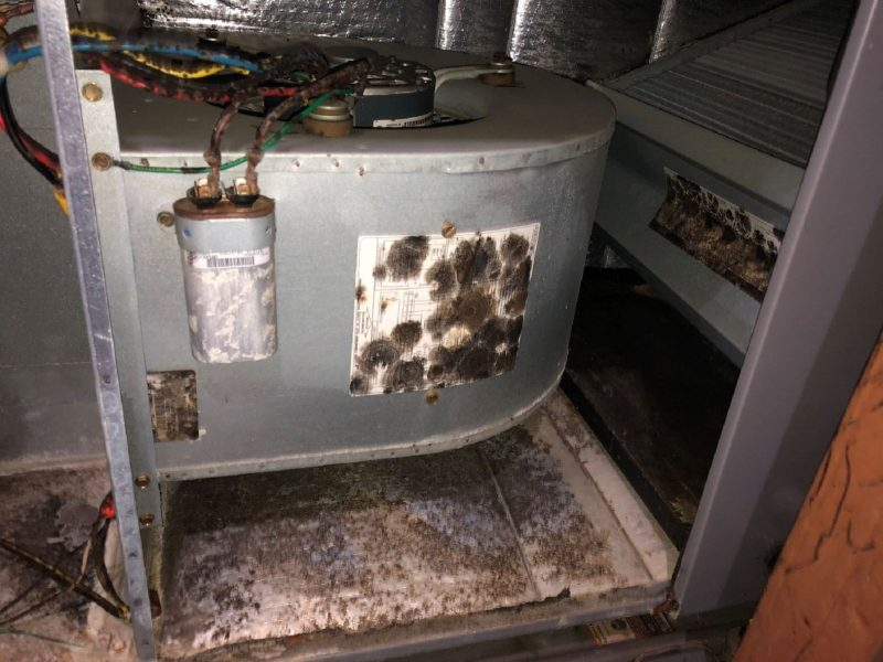 Moldy Air Handler